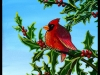 cardinalpainting_da